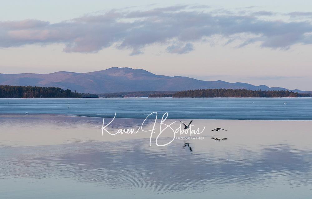 Two ducks take flight from Saunders Bay on Lake Winnipesaukee.  (Karen Bobotas/for the Laconia Daily Sun)