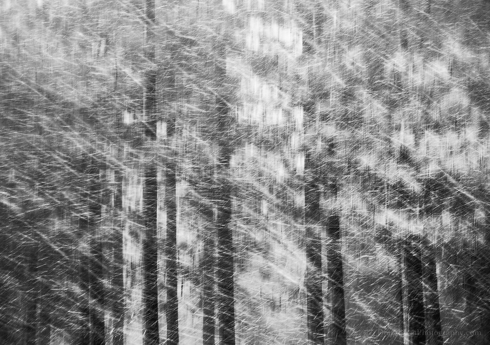 I remember one of the first time I ever experienced snow falling and I was in awe. It was like rain but it fell in slow motion. At that time, I experimented with a slow shutterspeedto capture the feeling of the snow falling. I realized that if I panned with the snow, I could create an abstraction with the trees while capturing the snow in finer detail. I had never seen this done beforeand felt excited by what I discovered. Nine years later, the snow hasn't lost this magic for me and I continue to experiment with this technique.