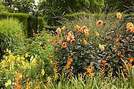 An orange border of dahlias and antirrhinum at The Savill Garden, Surrey, UK