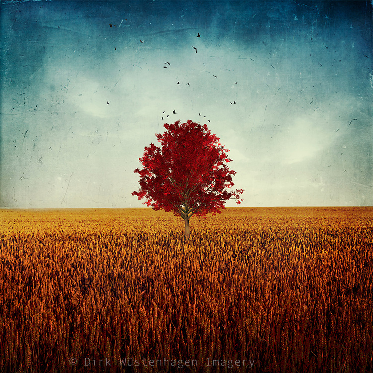 Lone  red tree in a filed. Surreal photo manipulation<br /> Redbubble products--> http://bit.ly/other_RB
