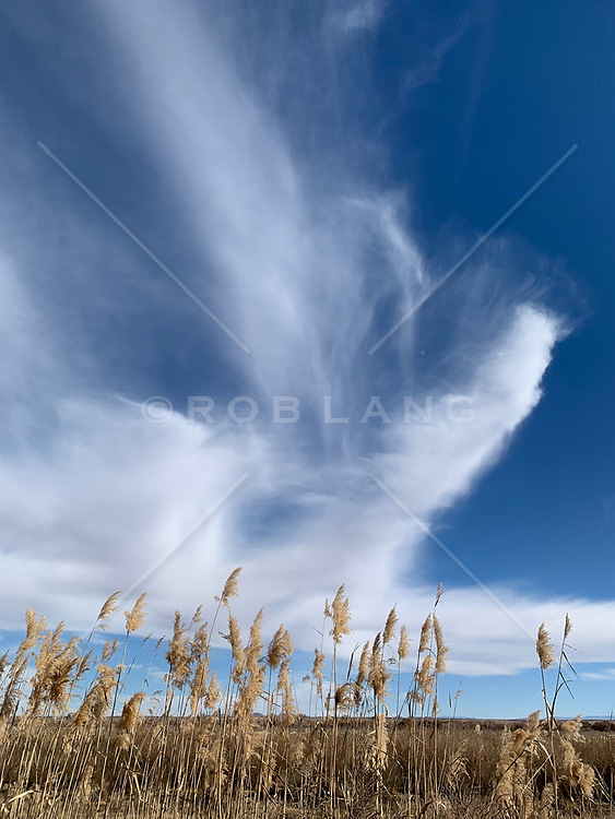 Clouds and grasses in New Mexico
