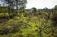 Europa, Deutschland, Nordrhein-Westfalen, Troisdorf, die Wahner Heide. - <br /> <br /> Europe, Germany, Troisdorf, North Rhine-Westphalia, the Wahner Heath.