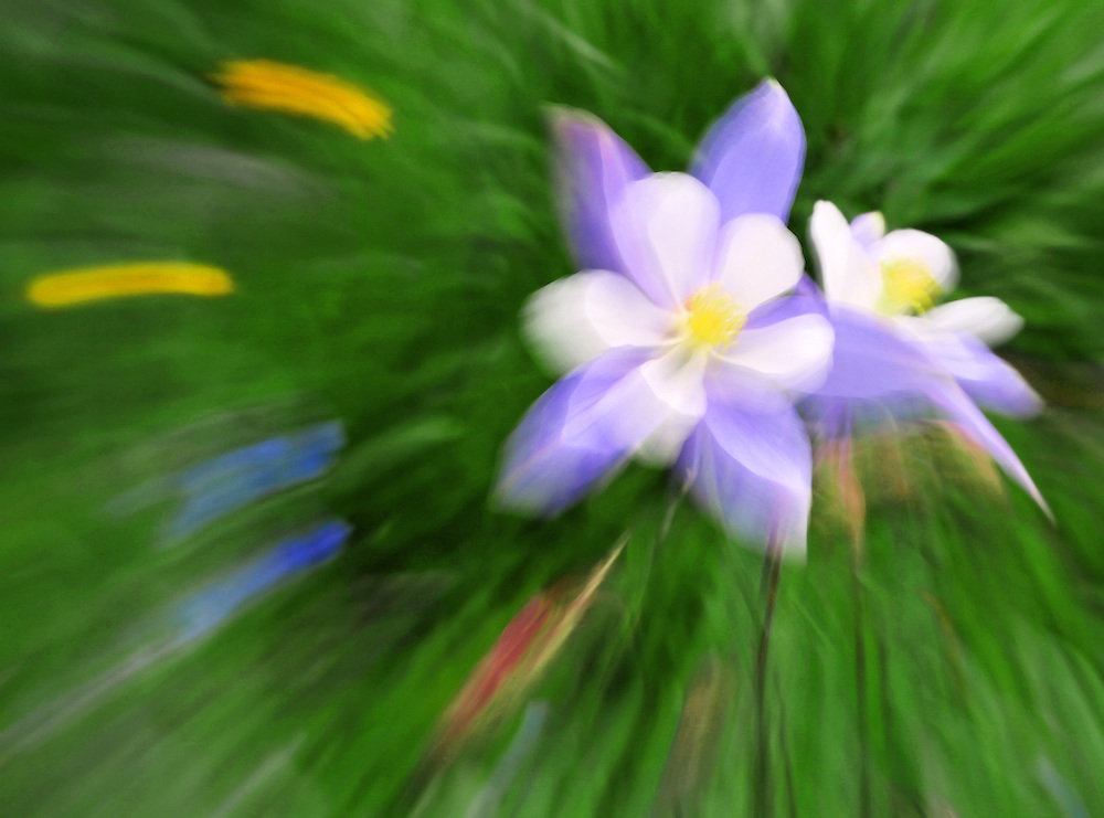 Zooming out during the exposure causes an impressionistic explosion of color.