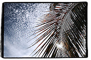 Palm tree leaves in Baja California Sur, conceptual photography