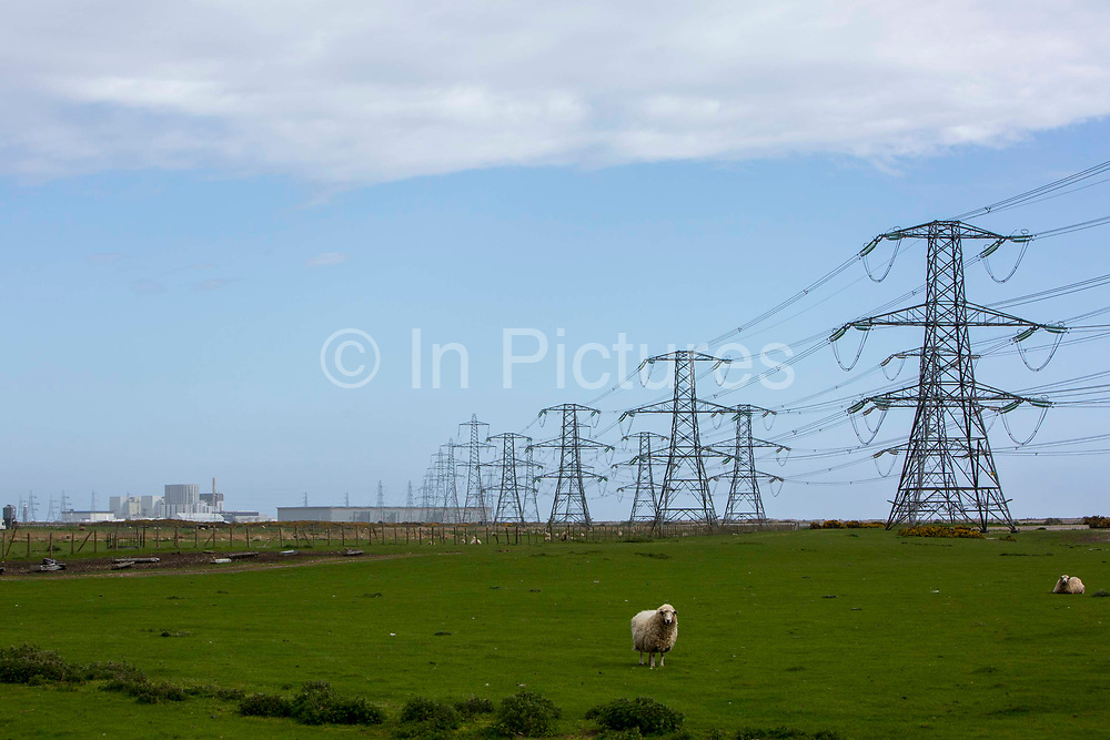 The first electrical pylons running out of Dungeness B nuclear power station in Kent, United Kingdom. The native Romney sheep inhabit all surrounding marshland.