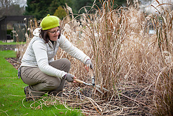 Cutting back grasses using shears