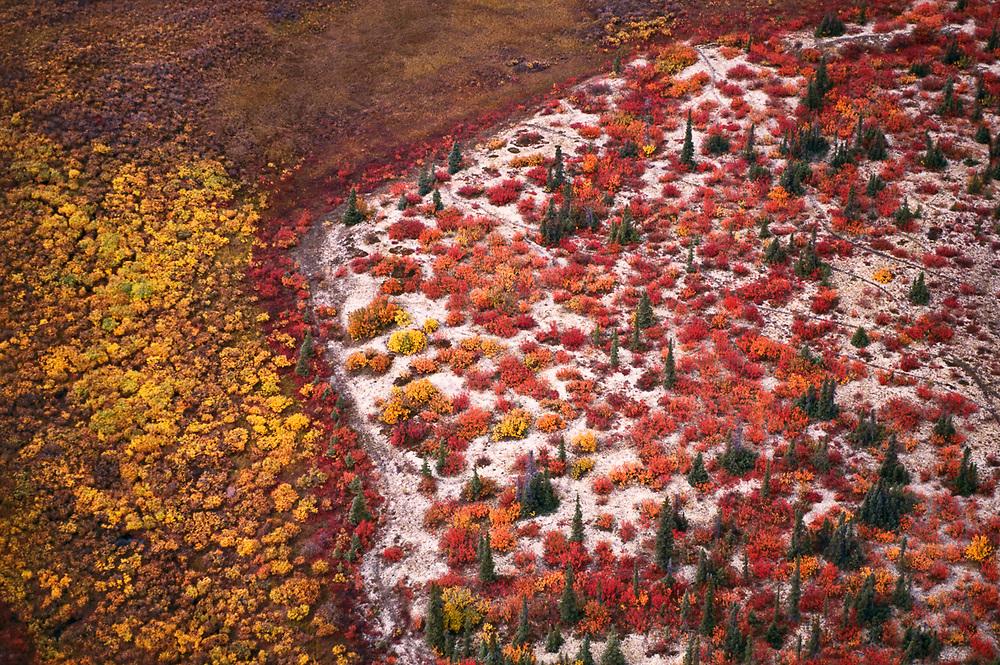 Aerial view, Kobuk Dunes Wilderness, September, Kobuk Valley National Park, Alaska, USA
