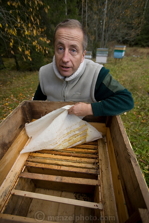 Aivars  Radzins, a forester and beekeeper, opens one of his beehives in the forest near his home in Vecpiebalga, Latvia. (Aivars Radzins is featured in the book What I Eat: Around the World in 80 Diets.)