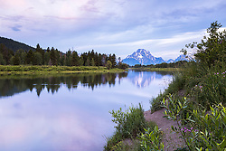 """A pretty morning at Jackson Hole's reflection pond, the Oxbow Bend in Grand Teton National Park.<br /> <br /> For production prints or stock photos click the Purchase Print/License Photo Button in upper Right; for Fine Art """"Custom Prints"""" contact Daryl - 208-709-3250 or dh@greater-yellowstone.com"""