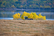 Photo Randy Vanderveen.Sturgeon Lake, Alberta.02/10/09.A farmer swaths a field as Sturgeon Lake and some brightly coloured leaves form a background. Farmers are busy in a race against the calendar and weather to get crops harvested and in the bin before winter arrives.
