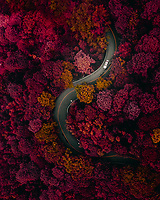 Aerial view of a vehicle driving a curvy road in forest during autumn season near Foshan, China.