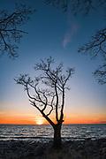 Black alder silhouette against the setting sun and the sea landscape of gulf of Riga, near Kutkāju rags, Latvia Ⓒ Davis Ulands | davisulands.com