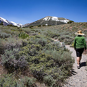 The Eastern Sierra's towns of Mammoth Lakes, June Lakes and surrounding areas weathered a historical and record producing winter snowfall that carried over into the summer. The Parker Lake trail was one of only a few hikes devoid of snow in late June. The lake and Parker Creek were filled to capacity and wildflowers bloomed along the trail.