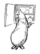 (Mole checking larder- illustration)