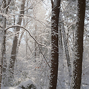 Breakheart Reservation with heavy snowfall, Wakefield, MA