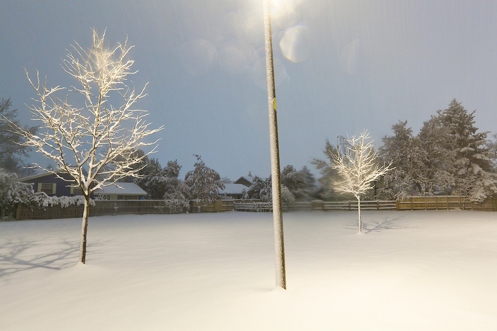 A pair of trees lit by a street lamp at night in Palo Park after a snow storm in Boulder, Colorado.