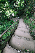 looking down a path with stairs in the woods