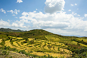 Traditional terraced fields of the Konso people, Ethiopia, Africa