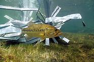 Fishiding-Reclaimed  Artificial Fish Habitat
