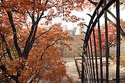 trees during fall season in urban environment
