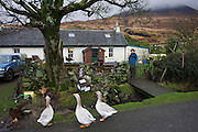 """Sarah Leggitt's estate cottage, a former Smithy with livestock at Lochbuie, Isle of Mull, Scotland. Sarah and her husband are, like many Mull inhabitants, of English birth. She and her husband moved from southern England 6 years ago to work for the Lochbuie Estate and the old Smithy is provided to them as living accommodation. Lochbuie is a settlement on the island of Mull in Scotland about 22 kilometres (14 mi) west of Craignure. The name is from the Scottish Gaelic Locha Buidhe, meaning """"yellow loch"""". http://lochbuie.com/Lochbuie"""