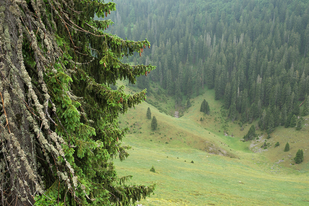 Abandoned grazing lands, Velebit mountains Nature Park, Croatia