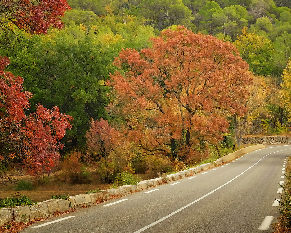 A typical road in rural France.  This one is the region of the Var in Provence.