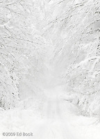 snowy Snowpark road to Mount Tahoma Trails, Ashford, Washington, USA