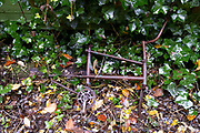 A rusting bike frame lies i Autumn leaves in Sydenham Hill Woods, on 25th October 2020, in London, England. Sydenham Hill Wood forms part of the largest remaining tract of the old Great North Wood, a vast area of worked coppices and wooded commons that once stretched from Deptford to Selhurst. The wood is home to more than 200 species of trees and plants as well as rare fungi, insects, birds and woodland mammals.