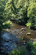 Water of Leith, summer