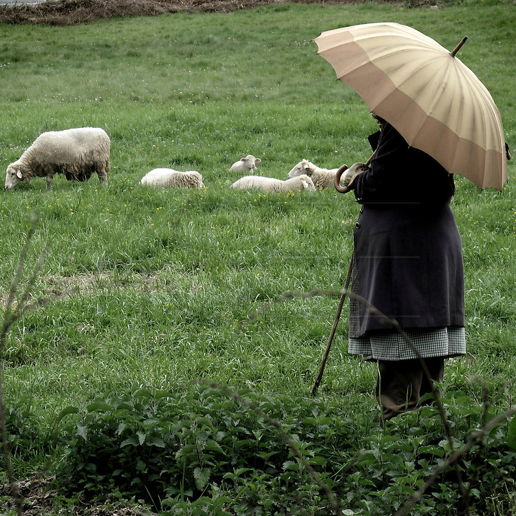 Shepherd woman in Galicia . Spain . The WAY OF SAINT JAMES or CAMINO DE SANTIAGO following the French Route, between Saint Jean Pied de Port and Santiago de Compostela in Galicia, SPAIN. Tradition says that the body and head of St. James, after his execution circa. 44 AD, was taken by boat from Jerusalem to Santiago de Compostela. The Cathedral built to keep the remains has long been regarded as important as Rome and Jerusalem in terms of Christian religious significance, a site worthy to be a pilgrimage destination for over a thousand years. In addition to people undertaking a religious pilgrimage, there are many travellers and hikers who nowadays walk the route for non-religious reasons: travel, sport, or simply the challenge of weeks of walking in a foreign land. In Spain there are many different paths to reach Santiago. The three main ones are the French, the Silver and the Coastal or Northern Way. The pilgrimage was named one of UNESCO's World Heritage Sites in 1993. When there is a Holy Compostellan Year (whenever July 25 falls on a Sunday; the next will be 2010) the Galician government's Xacobeo tourism campaign is unleashed once more. Last Compostellan year was 2004 and the number of pilgrims increased to almost 200.000 people.