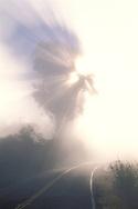 Sunbeams through fog and tree over two lane rural country mountain road, Mount Tamalpais, Marin County, California