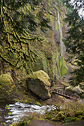 The verdant trail to Wahclella Falls (not pictured) crosses a footbridge over Tanner Creek in mossy Columbia River Gorge National Scenic Area, Oregon, USA.