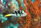 Sealife - Indonesia