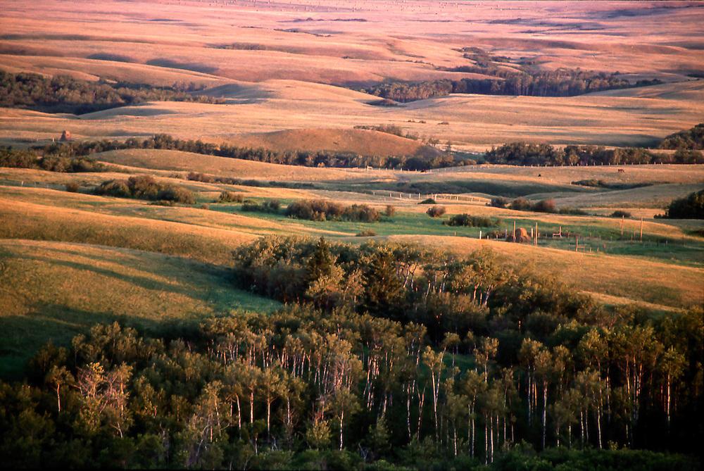 Early morning sun illuminates Cypress Hills, Saskatchewan
