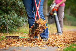 Gathering leaves with broom, leaf blower and grabber
