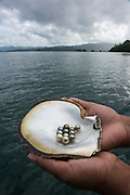 Fiji black pearls<br /> Fiji produces various color 'black' pearls<br /> Savusavu island<br /> Fiji. South Pacific<br /> J Hunter Pearl Farm