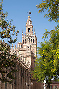 La Giralda tower of the cathedral originally built as a Moorish minaret in the twelfth century, Seville, Spain