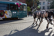 Horses giving tourists carriage rides trot towards a crossing tram in central Krakow, on 23rd September 2019, in Krakow, Malopolska, Poland.