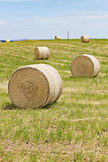 Round hay bales in a paddock on a farm after baling in rural Monteith, South Australia, Australia. <br /> <br /> Editions:- Open Edition Print / Stock Image