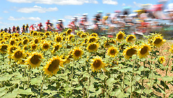 July 15, 2017 - Rodez, FRANCE - The pack of riders pass by a field of sunflowers during the 13th stage of the 104th edition of the Tour de France cycling race, 181,5 from Blagnac to Rodez, France, Saturday 15 July 2017. This year's Tour de France takes place from July first to July 23rd...BELGA PHOTO DAVID STOCKMAN (Credit Image: © David Stockman/Belga via ZUMA Press)