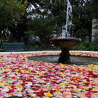 South America, Ecuador, Cayambe. Rose Petals float in the gaden fountain at Hacienda Compania.