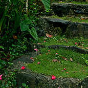 Lovely tropical flowers in Samoa.