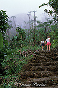 trail to Mt. Scenery, Saba Island, Netherlands Antilles, <br /> ( Eastern Caribbean Sea )