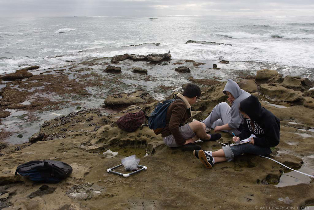A group of students studying marine invertebrate ecology take measurements at Bird Rock in La Jolla, California.
