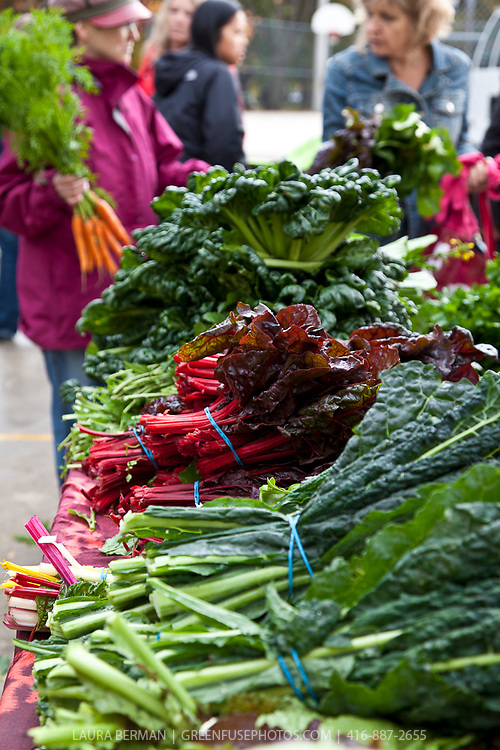 The colorful vegetables and shoppers at a farmers market.