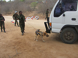 Oct. 6, 2014 - BALULE RESERVE, SOUTH AFRICA: Black Mamba roadblock uses sniffer dogs to check for illegal animal parts. LED BY BRITISH former military personnel these pictures show how courageous women anti-poachers train with guns in their battle to preserve Africa's endangered animals. Operating in the Kruger National Park's Balule Nature Reserve the 24-member strong all-female Black Mamba Anti-Poaching Unit patrols 50,000 hectares of bush to protect elephants and rhinos that are hunted as part of the estimated £12billion a year illegal world animal trade. These ladies, who as pictures show pose with weapons but also know how to party, are on the front line of a deadly war for the resources of their continent. Over the past year 1,000 wildlife rangers have been killed in Africa while protecting endangered wildlife. Black Mamba Commander and former Royal Navy serviceman Russell Baker (28) from Grimsby, UK explained exclusively how and why this South African special unit was established. (Credit Image: © Media Drum World/MediaDrumWorld/ZUMAPRESS.com)