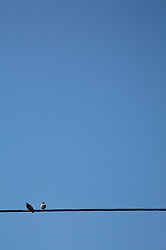 Two birds on a wire against cloudless blue sky