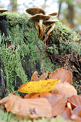 paddenstoelen en schimmels, toadstools and mushrooms