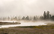 Early bird gets the worm. Or so hopes this early riser in Yellowstone on the Madison River.